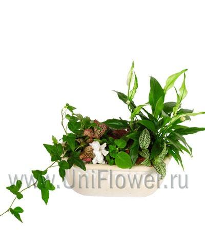 Капельный полив комнатный растений