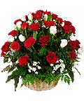 Корзина 71 бордовая роза «С благодарностью»